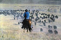 roundup-buffalo-250px.jpg