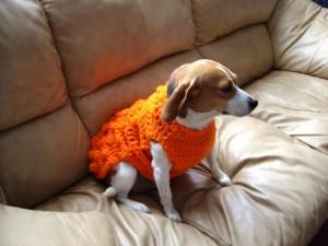 Yardsellr Dog Sweater