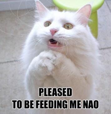 lolcat needs food