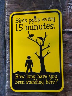 warning birds