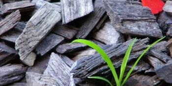 Biofuel producer KiOR sets IPO price at $15