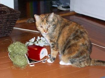 Vandal Kitty