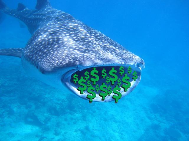 Whale Shark Money