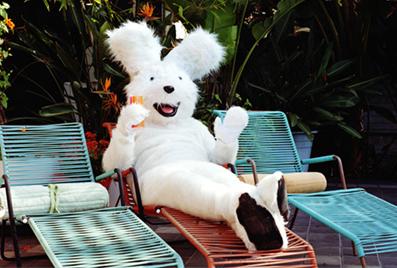 Wayfair bunny on furniture