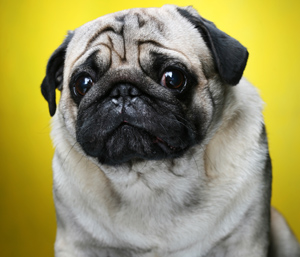 ss-sad-dog-kodak