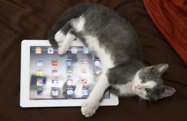 flickr-cat-ipad