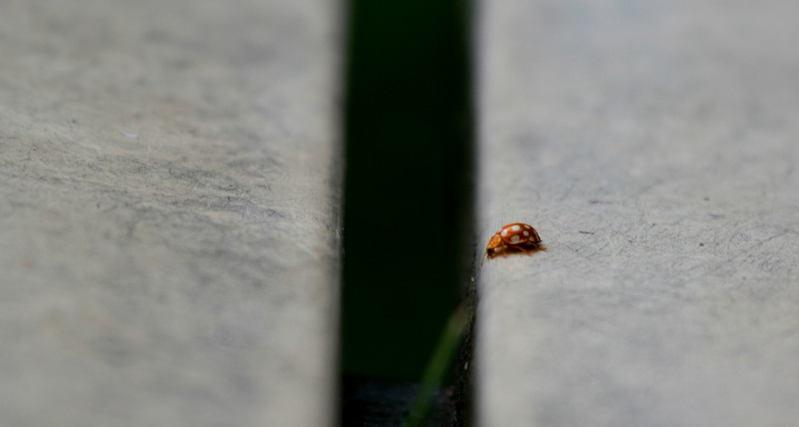 like this little bug, Silicon Valley startups are facing a widening gap with the rest of the world