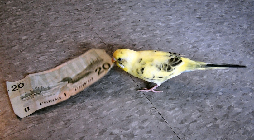 Derwent Capital Markets is using Twitter to figure out where the money is going. Just like this bird