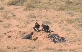 Men digging up E.T. games in the desert