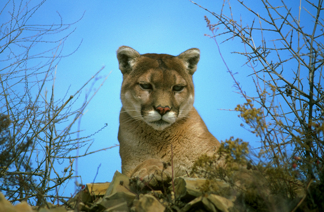 mountain-lion-update