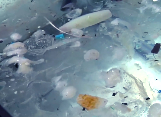 garbage-island-vice