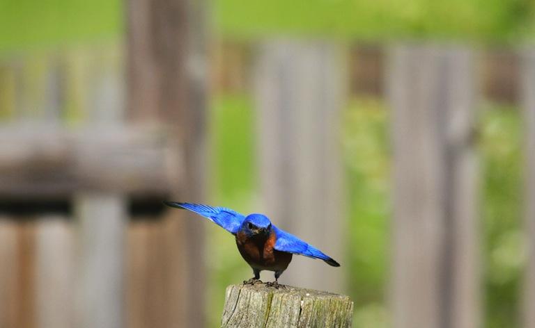 Twitter bird fly