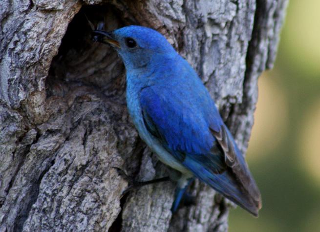 flickr-blue-bird-twitter
