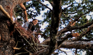 The bird's nest