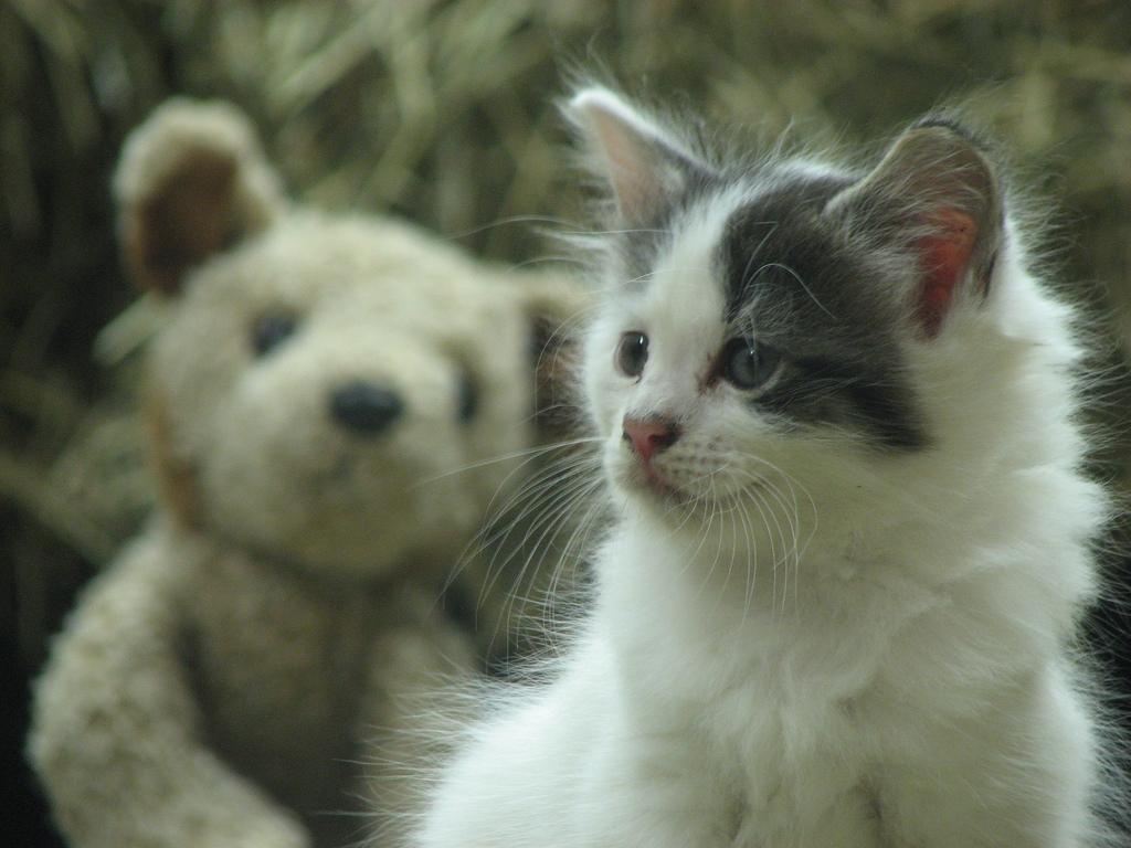 survival cat