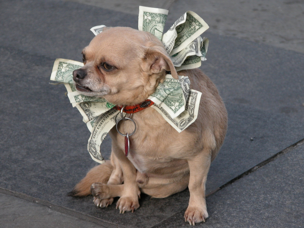 crowdfunding dog