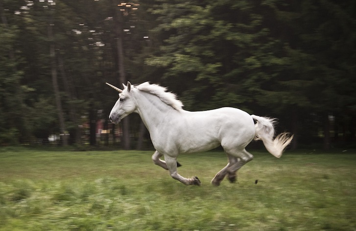 Hiring the perfect candidate is like finding a unicorn