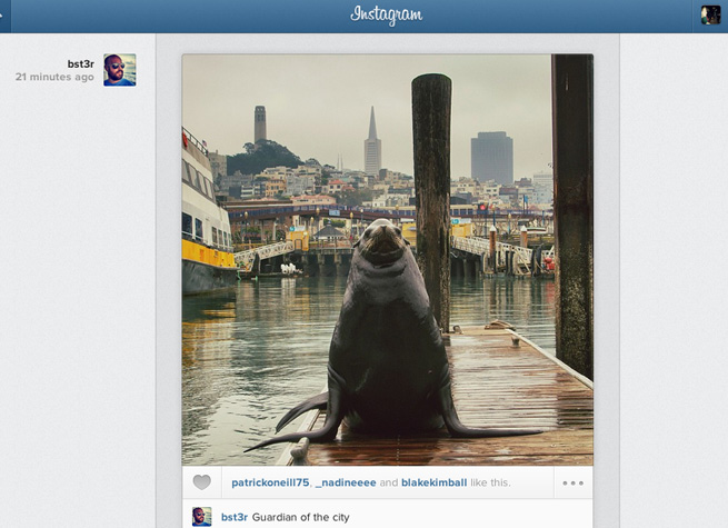 instagram-web-feed