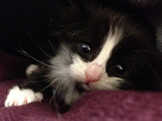 Photo of a sad kitten