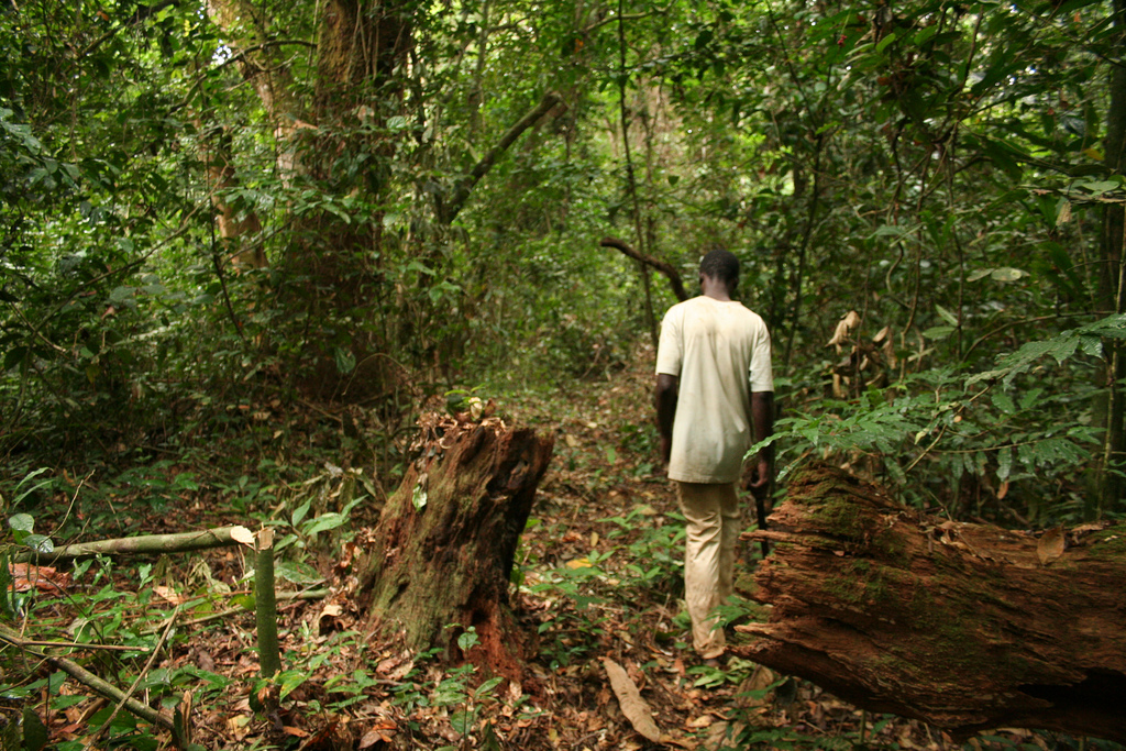 Amazon of africa jumia heats up with 26m venturebeat africa rainforest sciox Image collections