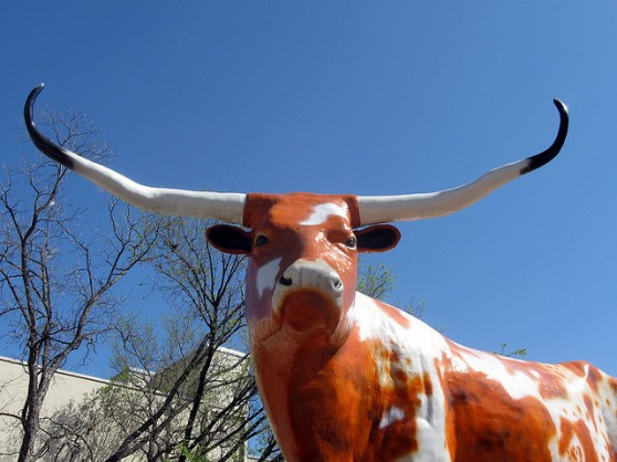 How do you win SXSW? With a very big steer