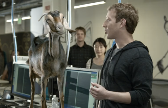 Mark Zuckerberg donkey