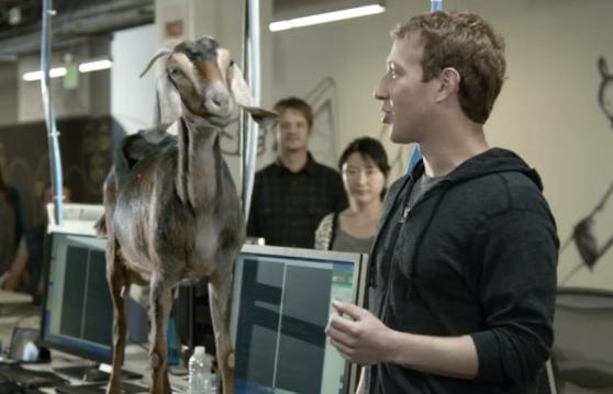 Mark Zuckerberg donkey