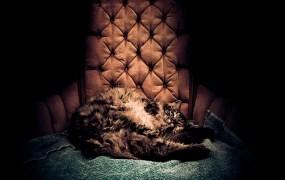 Fat cat sitting in a chair.