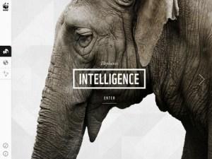 WWF iPad app