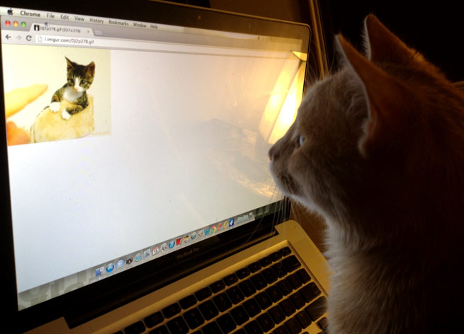 A cat watching a cat GIF
