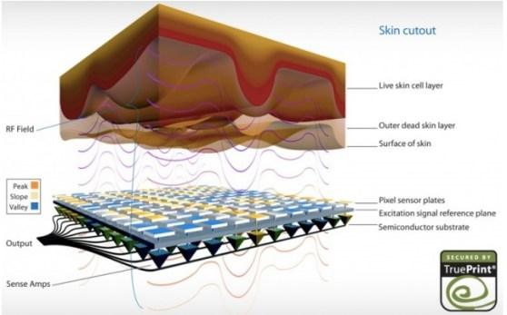 Concave fingerprint sensor