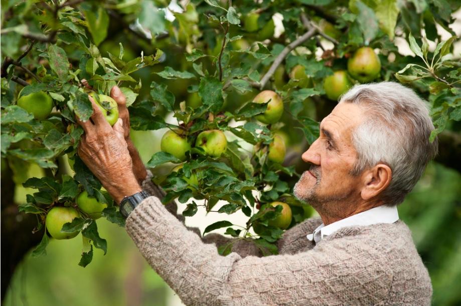Orchard farmer