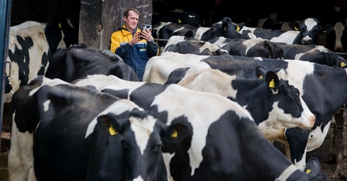 Monitoring cows with chips