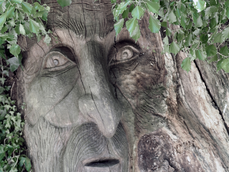 The tree man from Lord of The Rings, now possible via Windows Azure