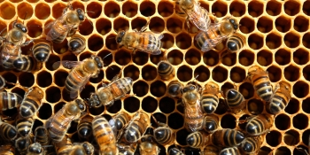 Waggl, inspired by honeybees to help people make decisions, secures $1M