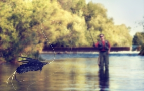 A person fly fishing in a river.