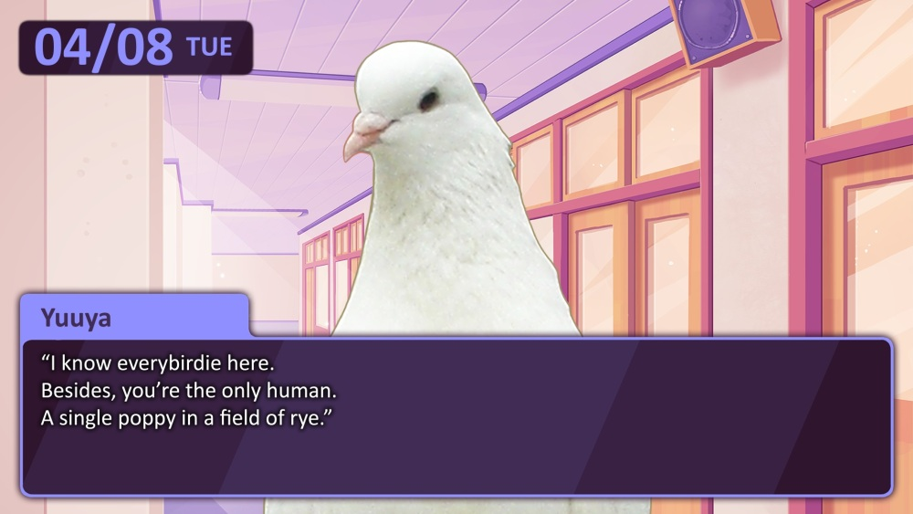 Pigeon dating sim in Melbourne