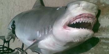 Grooveshark suffers a potentially fatal legal blow in NY federal court