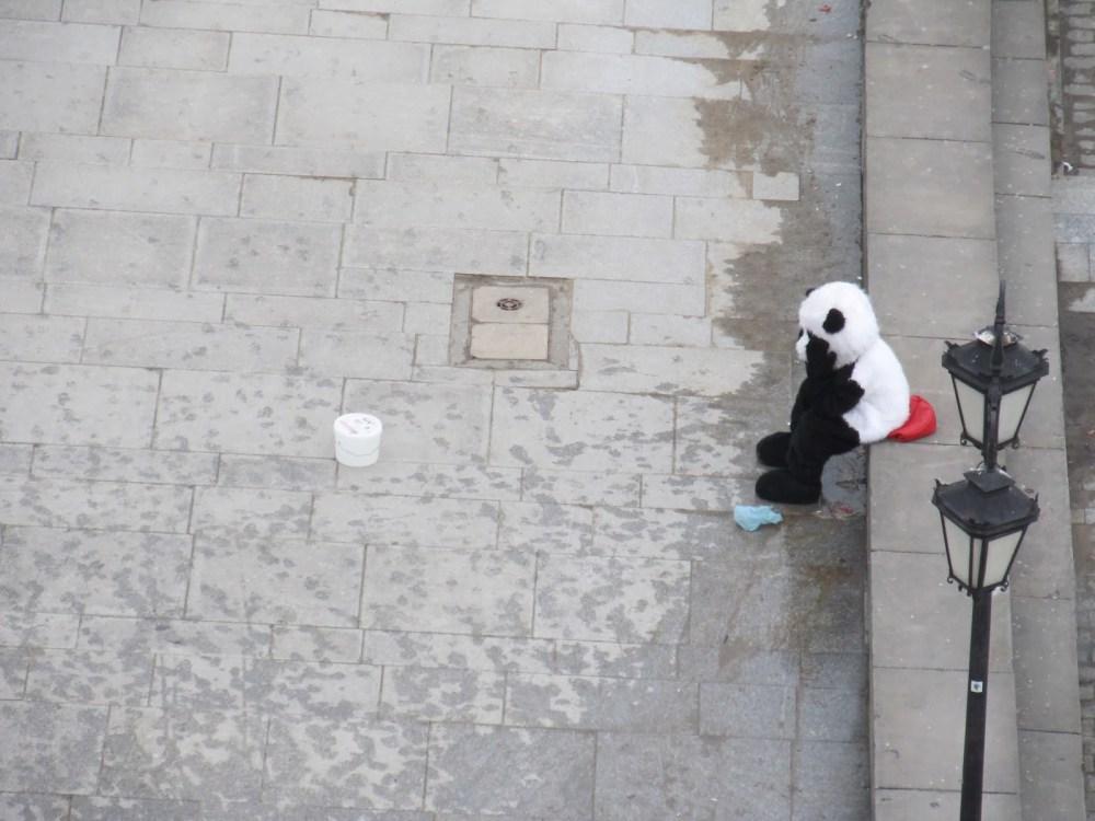 Sad panda Warsaw - innaerasmus