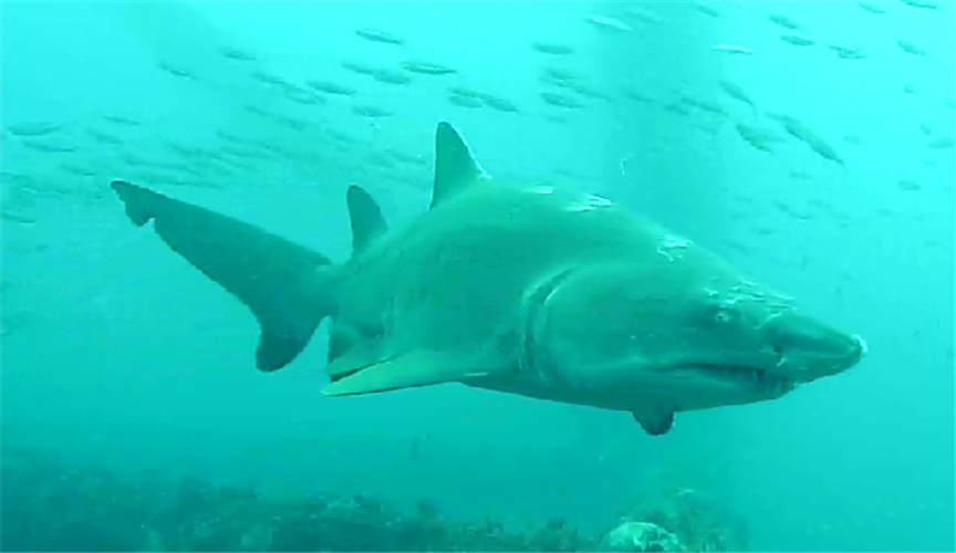 New Open Water Streaming Shark Cam Turns Every Day Into