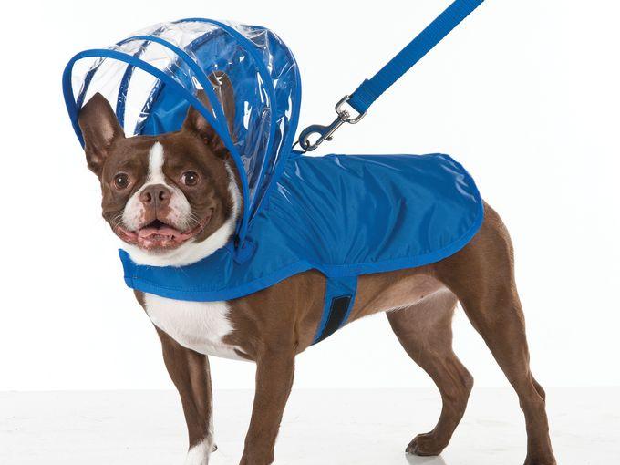 doggie raincoat