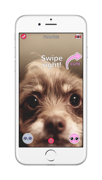 Buzzfeed Cute or Not app