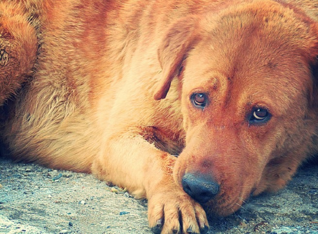 Moody dog