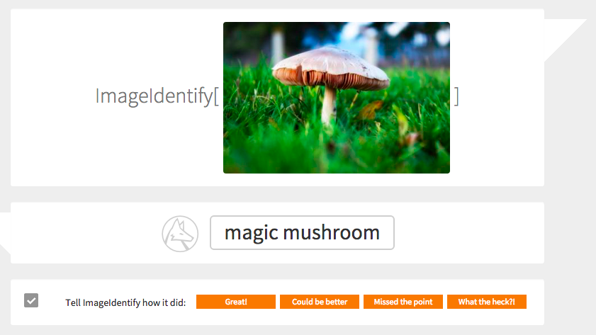 Is that a magic mushroom? ImageIdentify thinks it is.