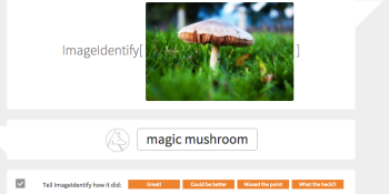 How Stephen Wolfram's image-recognition tool performs against 5 alternatives