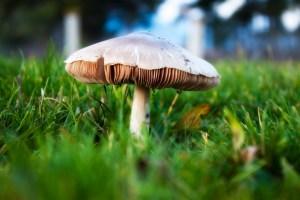 Mushroom.