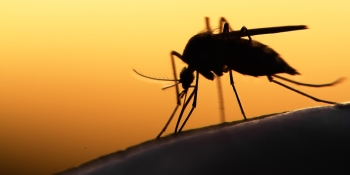 Microsoft wants to help capture mosquitoes to prevent disease outbreaks