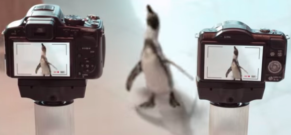 """From Dubai Airport's """"Fly Like a Penguin"""""""