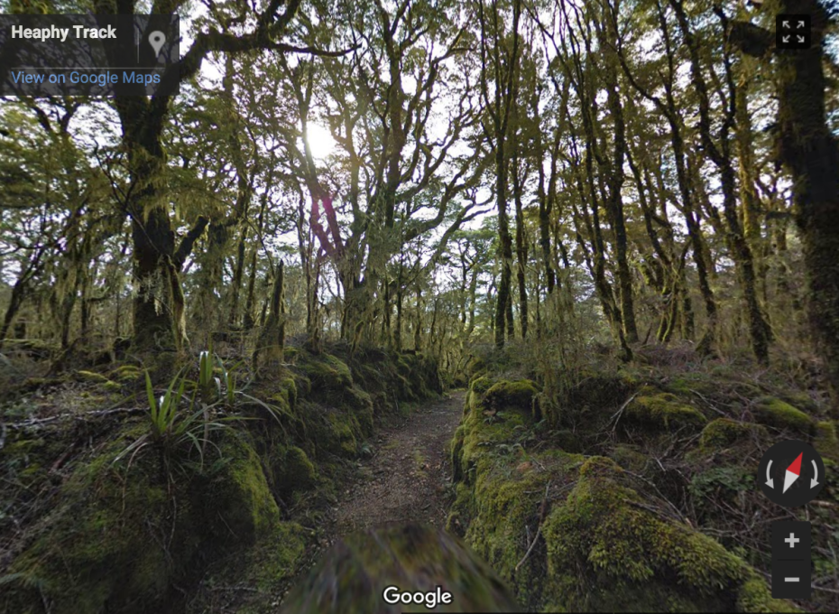 """Wander through an Enchanted Forest on the Heaphy Track."""