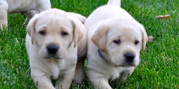 Kuddly, a company that charges $2 for professional pet advice, raises $1.5M